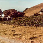 Long before Coffee Shack, note the current bar & kitchen buildings (they were stables)