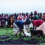 Traditional Xhosa ceremony