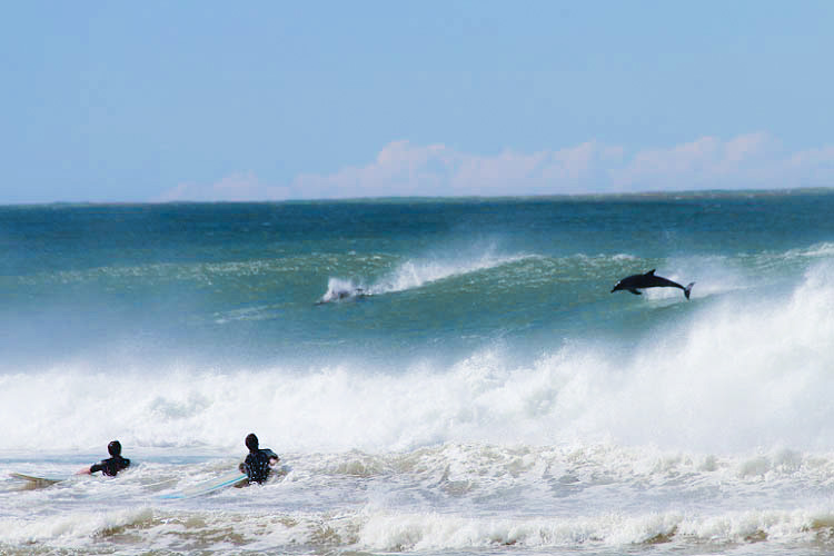 Coffee Bay - surfing with dolphins