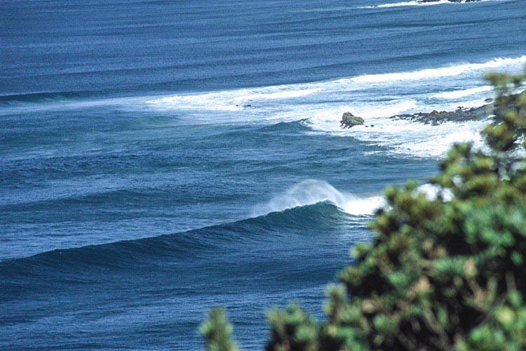 2 wild surfers